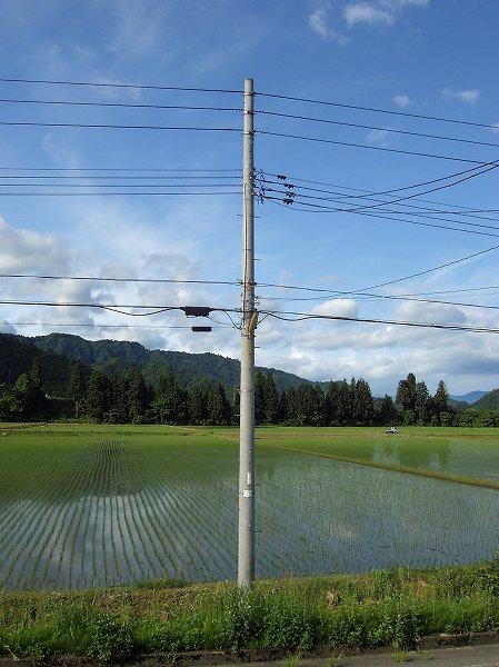 今朝の魚沼産コシヒカリの田んぼは青空が広がっています