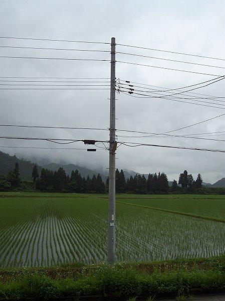 魚沼産コシヒカリの田んぼは雨上がりで空気がひんやりとしています