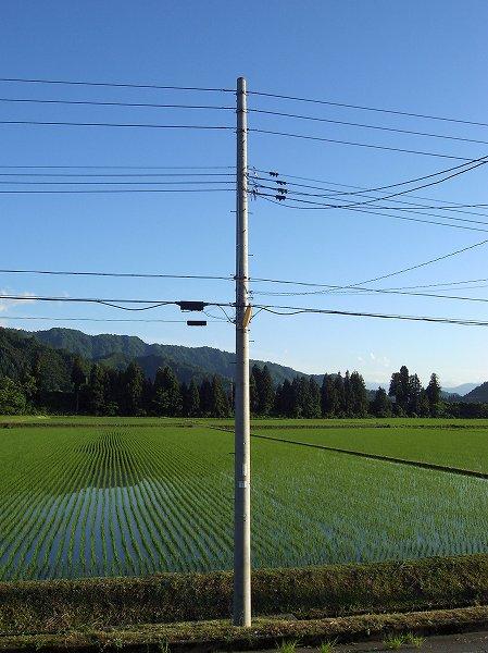 午後になってから青空が広がって、夕方にはいい天気になりました
