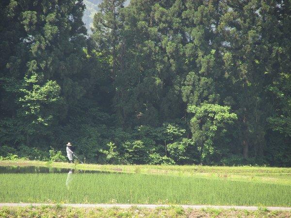 田んぼの畦の草刈り作業が始まりました