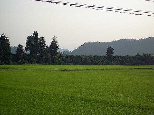 暑かった一日 ~ 夕方になってようやく風が涼しく感じるようになってきました