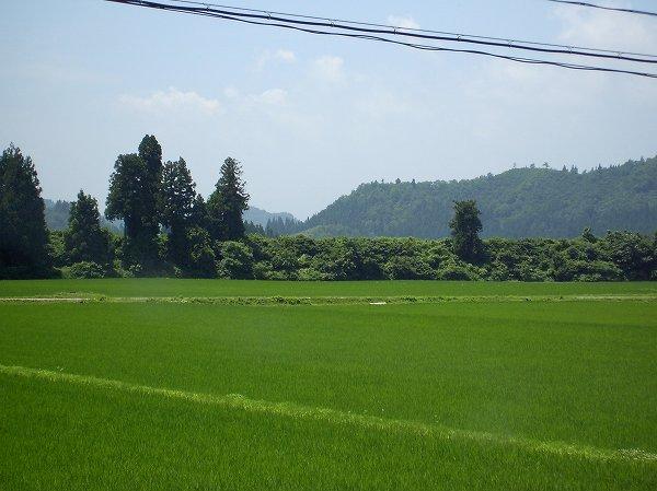 魚沼産コシヒカリの田んぼはよく晴れて爽やかな天気です