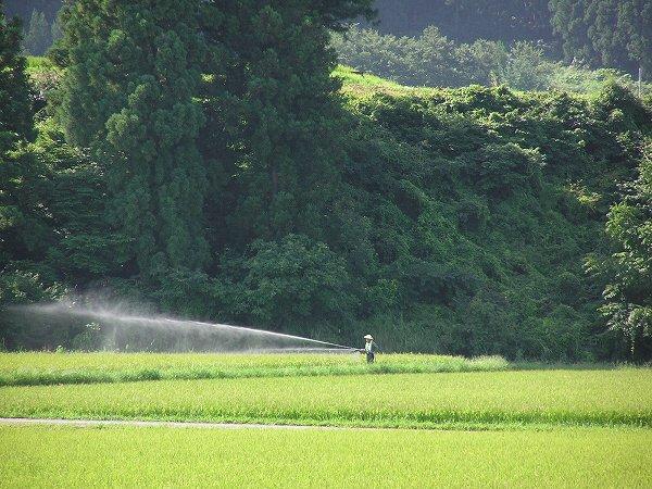 田んぼでは農薬(たぶん)の散布が行われています