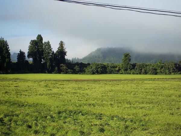 今朝の魚沼産コシヒカリの田んぼは澄んだ青空が広がっています
