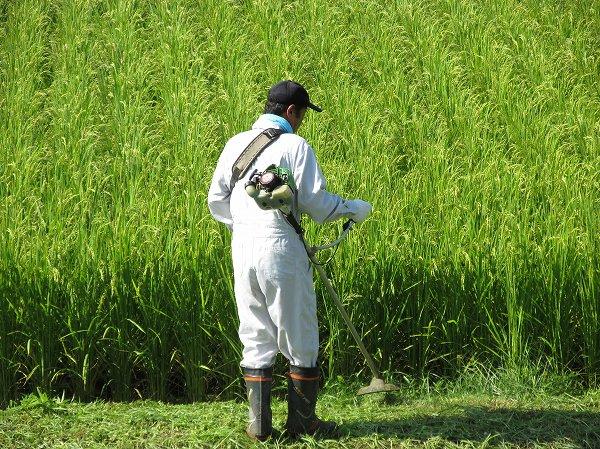 暑い中での田んぼの畦の草刈り作業