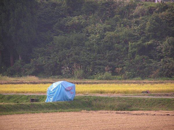 田んぼの脇でスタンバイしているコンバイン