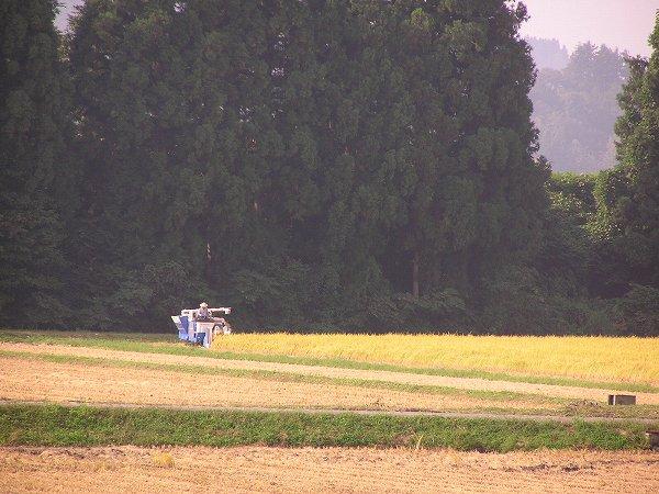 朝早くから稲刈り作業が行われている田んぼ