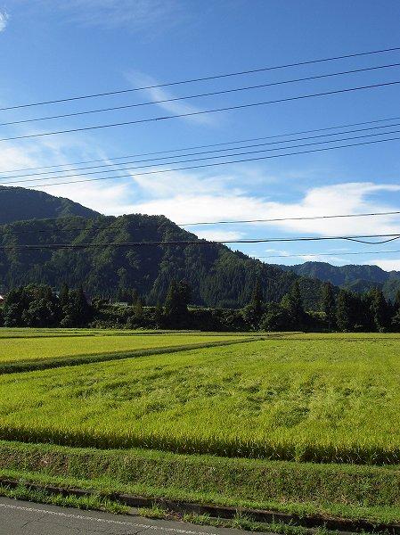 青空が広がって、涼しくて、気持ちのいい朝です