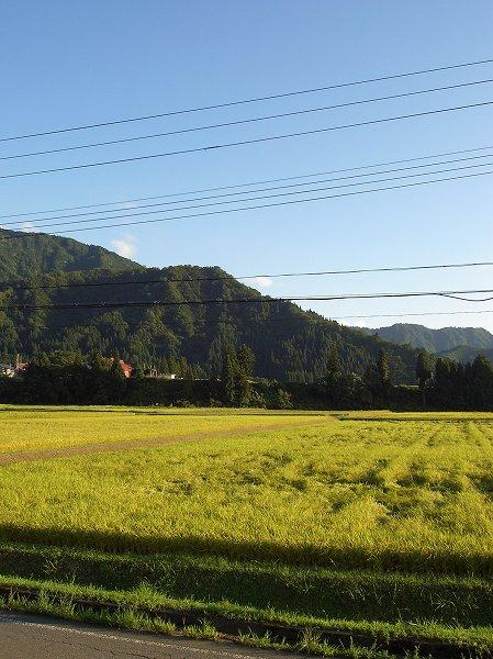 魚沼産コシヒカリの田んぼは秋晴れの爽やかな一日でした