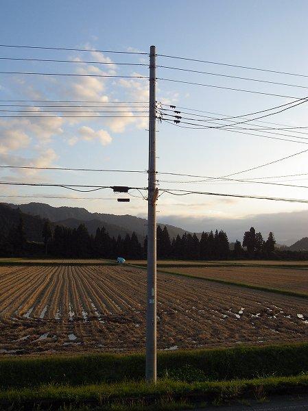 夕陽に照らされた魚沼産コシヒカリの田んぼ
