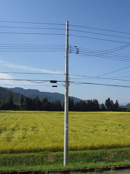 魚沼産コシヒカリの田んぼは爽やかな秋の空が広がっています