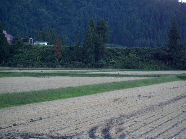 魚沼産コシヒカリの田んぼは今日も一日いい天気でした