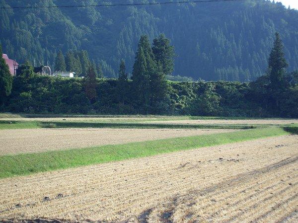 稲刈り作業の時期はそろそろ終わりになりそうです