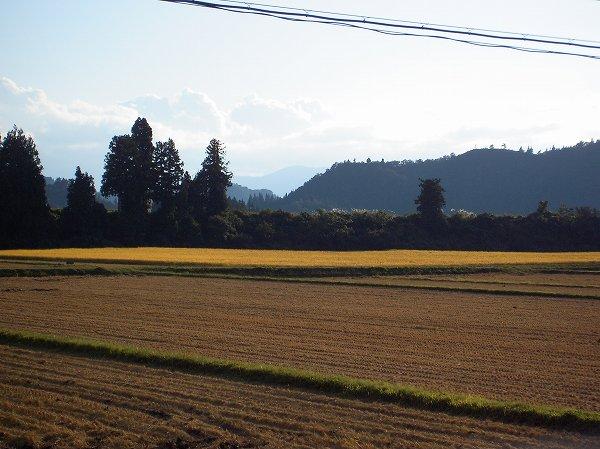 天候に恵まれて魚沼産コシヒカリの稲刈りがどんどん進んでいます