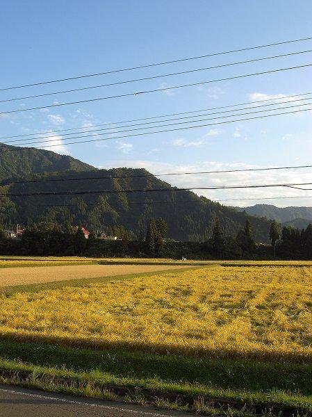 いい天気で魚沼産コシヒカリの稲刈り作業が進みました