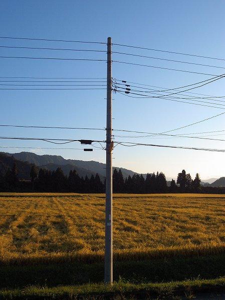 夕日に照らされた田んぼで魚沼産コシヒカリの稲刈り作業が続いています