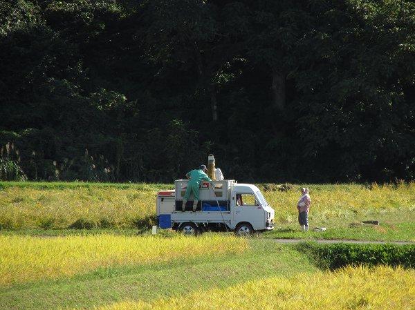 田んぼで魚沼産コシヒカリの稲刈りが行われています