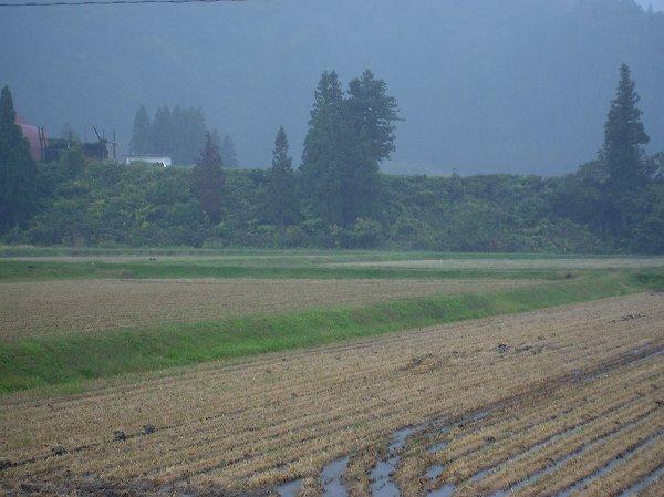 今朝の魚沼産コシヒカリの田んぼは秋の深まりを感じます