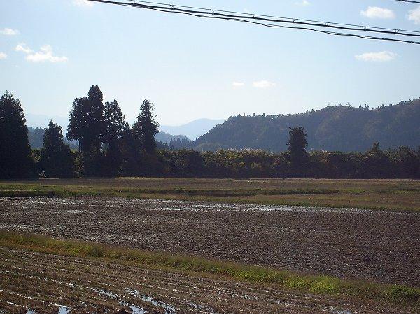 魚沼産コシヒカリの田んぼは陽ざしがまぶしくあたたかいです