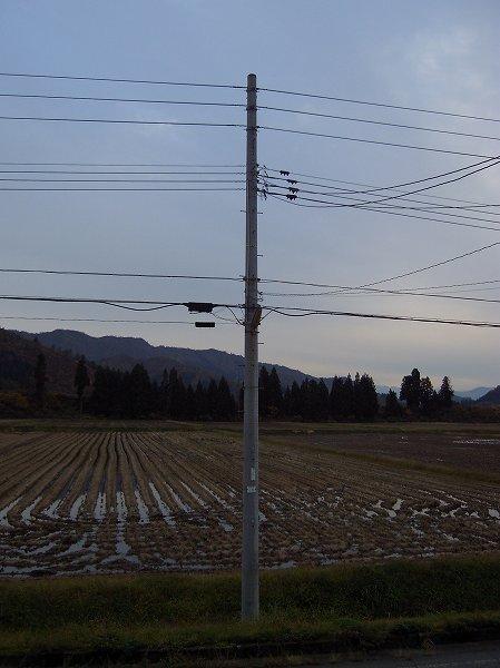 魚沼産コシヒカリの田んぼはくもりであまり寒くなかったです
