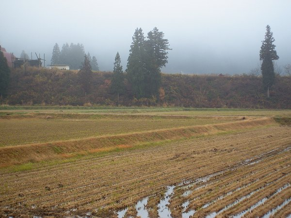 魚沼産コシヒカリの田んぼの向こうの山が霧で覆われています