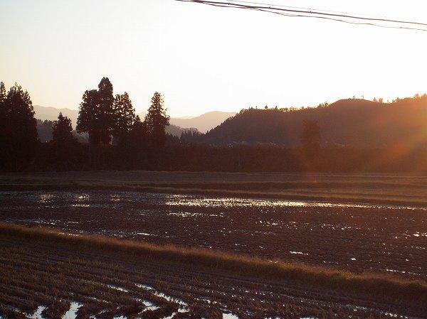 魚沼産コシヒカリの田んぼは今日もあたたかい一日でした