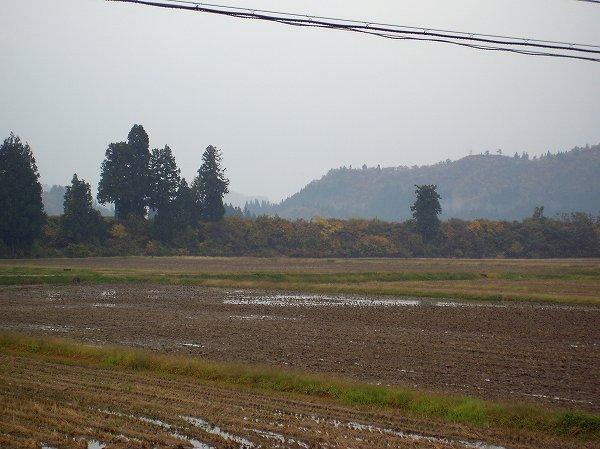 今朝の魚沼産コシヒカリの田んぼは肌寒いです