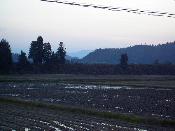 今日の魚沼産コシヒカリの田んぼはいい天気であたたかい一日でした