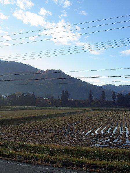 魚沼産コシヒカリの田んぼは今朝も青空が見えていい天気です