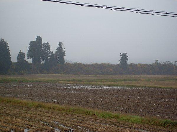 魚沼産コシヒカリの田んぼの向こうの山が霧に覆われています