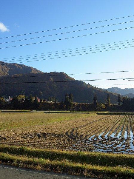 魚沼産コシヒカリの田んぼは青空が広がっていい天気になりました