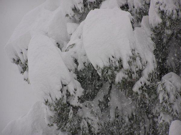 新潟県南魚沼市では朝から激しく雪が降り続いています
