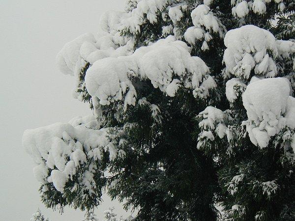 いよいよ本格的な冬に突入です