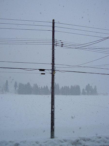 魚沼産コシヒカリの田んぼでは雪が強く降り始めました