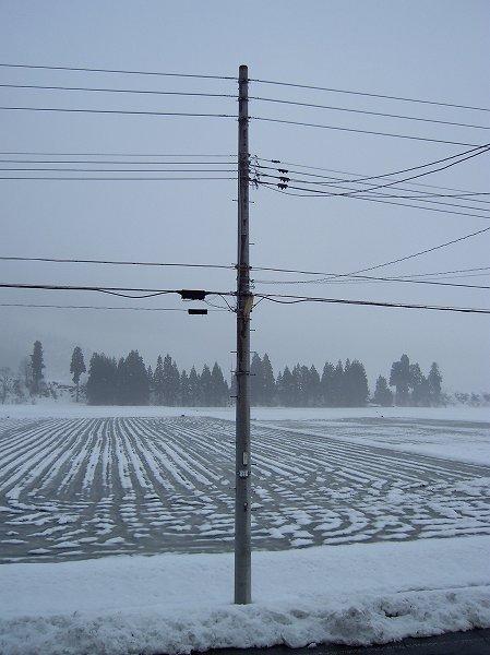 魚沼産コシヒカリの田んぼの雪がかなり消えてきました