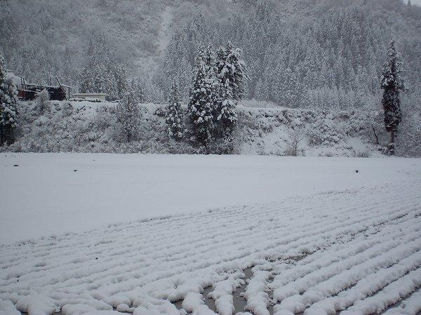 田んぼが雪景色に・・・いよいよ冬に突入です