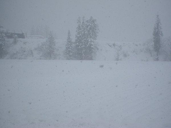 魚沼産コシヒカリの田んぼではひと晩で50~60cmくらい雪が積もりました