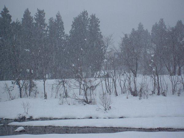 水無川では雪が強く降り始めました