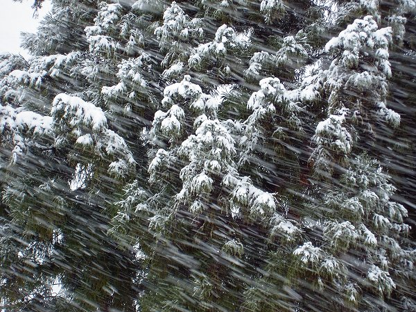 新潟県南魚沼市では激しく雪が降っています