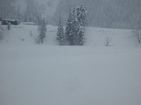 魚沼産コシヒカリの田んぼでは昨晩から30cmくらいの雪が積もりました