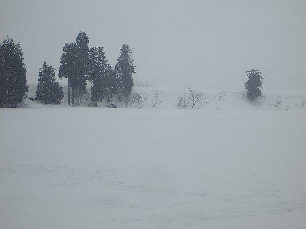 魚沼産コシヒカリの田んぼではやや湿った雪が降っています