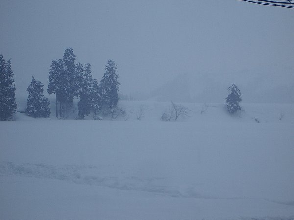 魚沼産コシヒカリの田んぼでは今日も雪が降りましたが、あまり積もっていません