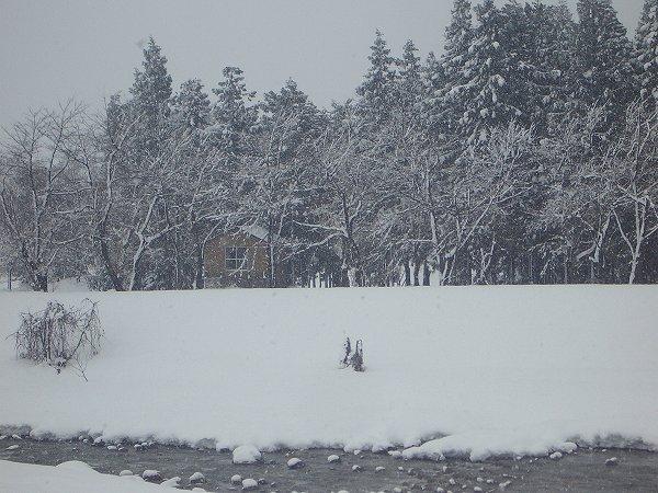 新潟県南魚沼市の水無川ではやや湿った雪が降っています