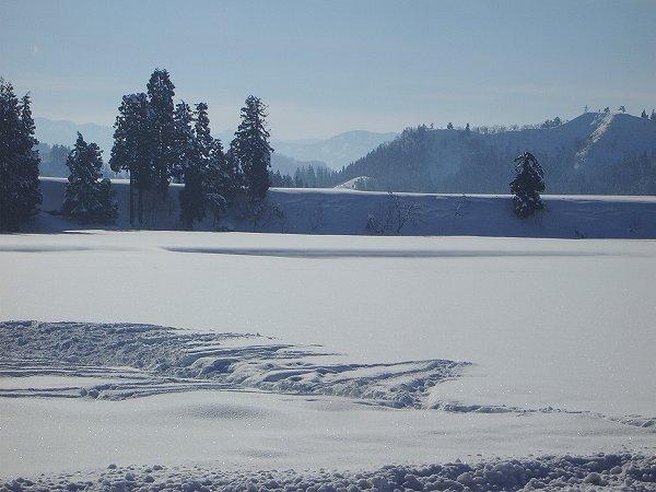 魚沼産コシヒカリの田んぼは青空が広がって雪面がまぶしいです