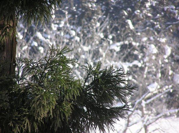新潟県南魚沼市は今年一番のきびしい冷え込みです