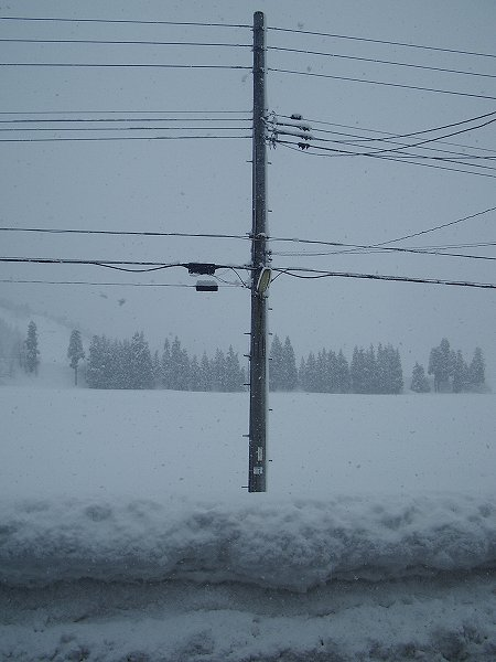 魚沼産コシヒカリの田んぼでは昨晩から30cmくらい雪が積もりました
