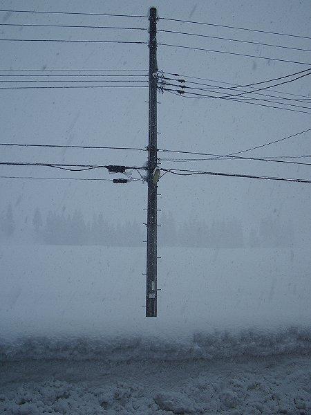 魚沼産コシヒカリの田んぼでは激しく雪が降っています