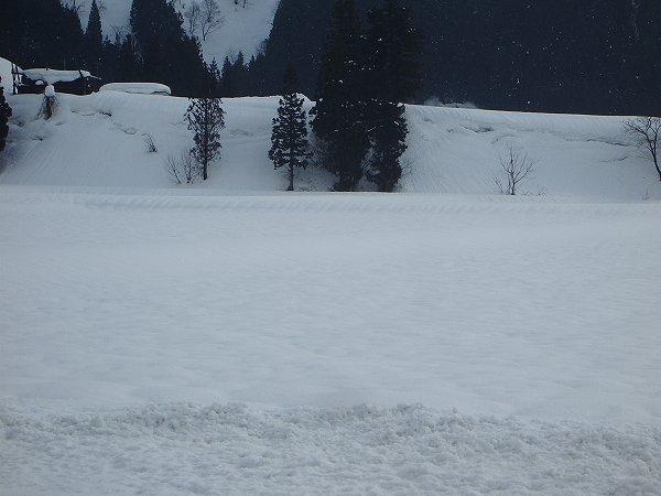 雪がちらほらと舞っています@魚沼産コシヒカリの田んぼ