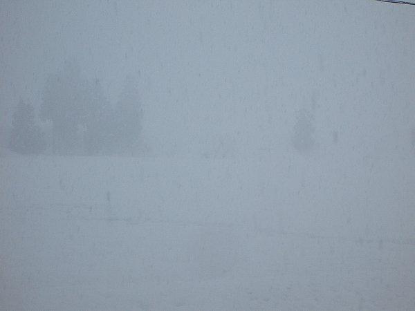 今日の魚沼産コシヒカリの田んぼは厳しい寒さです