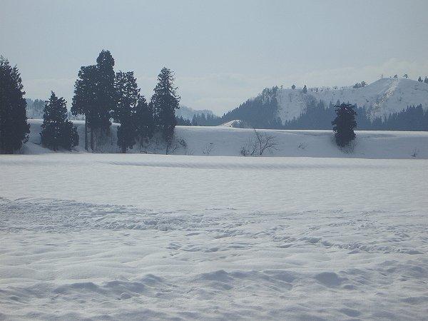 昨日に続いて魚沼産コシヒカリの田んぼはいい天気になりました